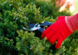 Fall & Spring Landscaping Services Burlington, WI